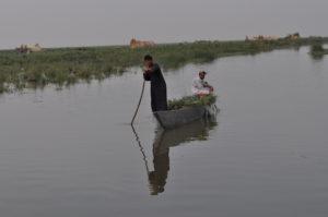 صورة من اهوار العراق - الجبايش