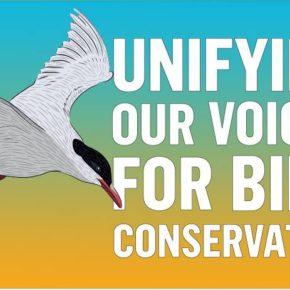 """اليوم العالمي للطيور المهاجرة : """" توحيد أصواتنا للحفاظ على الطيور"""""""