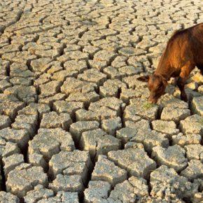 ازمة شحة المياه في ناحية آل بدير - الديوانية
