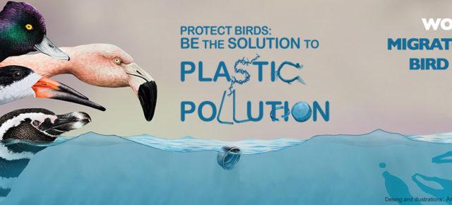 """اليوم العالمي للطيور المهاجرة: """"حماية الطيور: كن حلاً للتلوث البلاستيكي"""""""